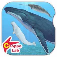 世界鲸与海豚图鉴~简单图鉴放置游戏系列~